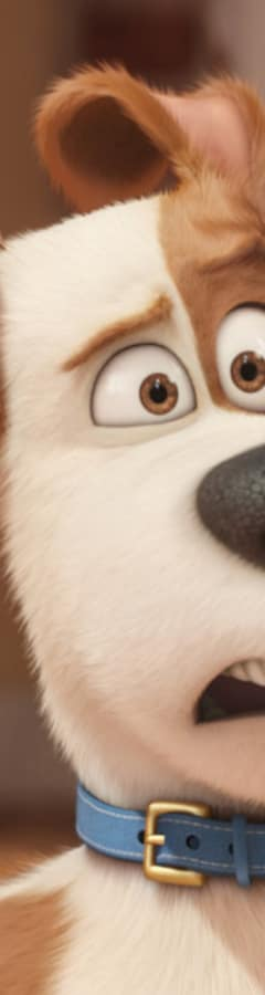 Movie still from The Secret Life Of Pets