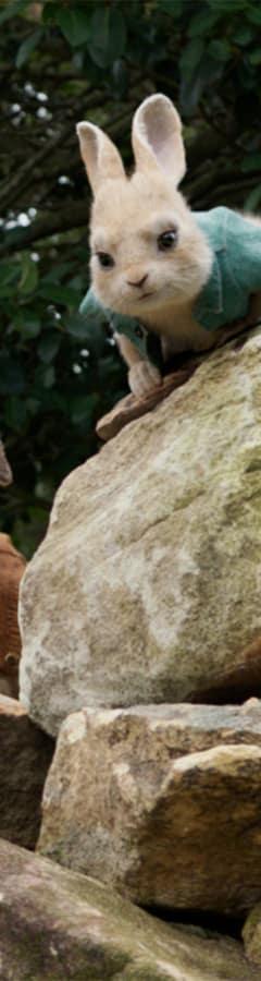 Movie still from Peter Rabbit