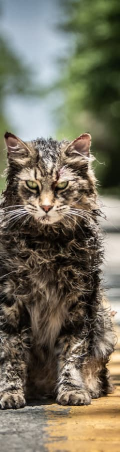 Movie still from Pet Sematary