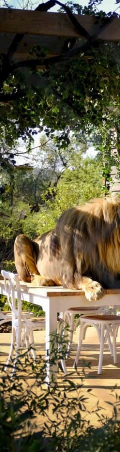 Movie still from Mia And The White Lion