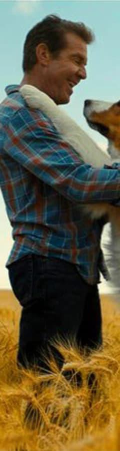 Movie still from A Dog's Journey