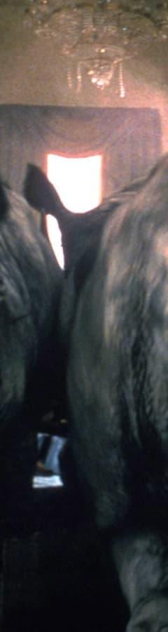 Movie still from Jumanji (1995)