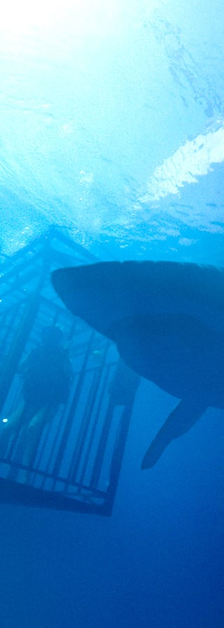 Movie still from 47 Meters Down
