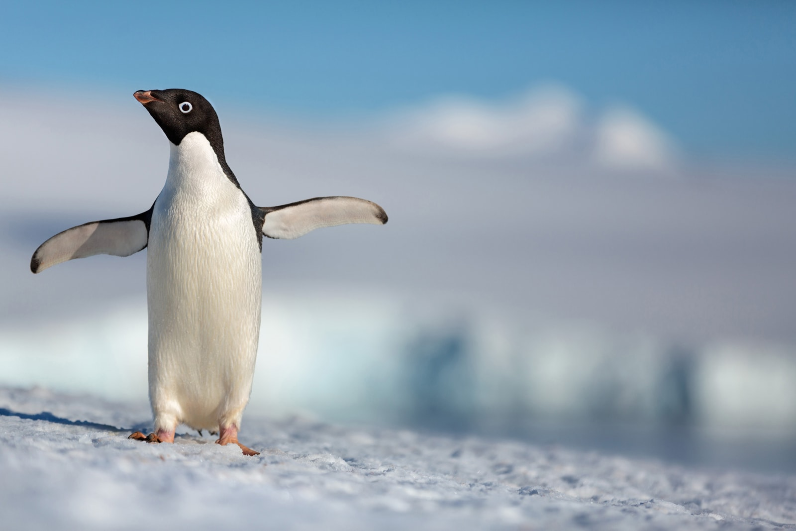 See Penguins in IMAX at AMC