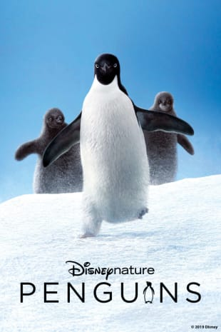 movie poster for Penguins (Disneynature)