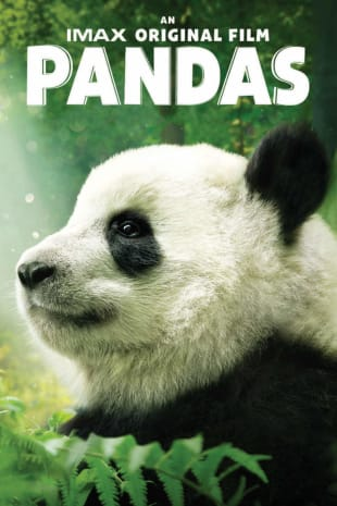 movie poster for Pandas