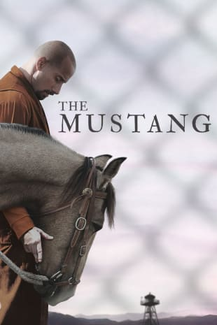 movie poster for The Mustang