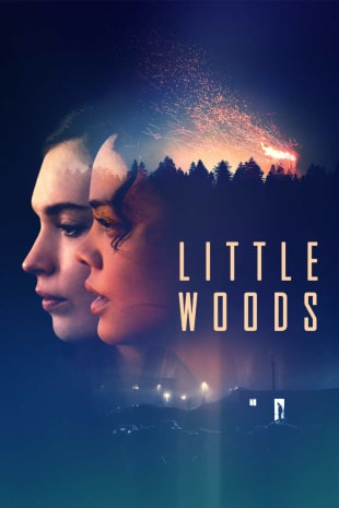 movie poster for Little Woods