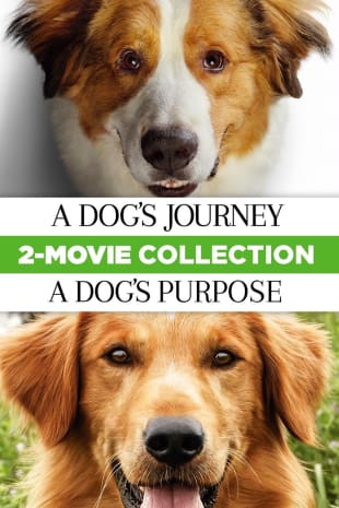 movie poster for A Dog's Journey & A Dog's Purpose