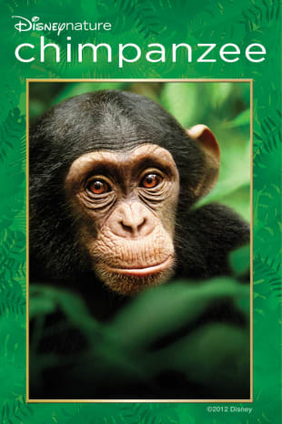 movie poster for Chimpanzee
