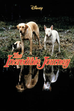 movie poster for The Incredible Journey