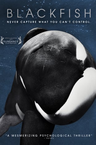 movie poster for Blackfish