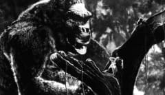 Scene from King Kong
